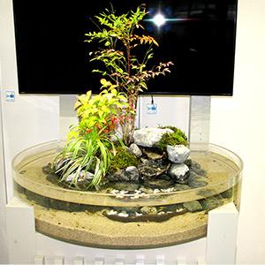 屋内ビオトープ「癒しの森」の写真