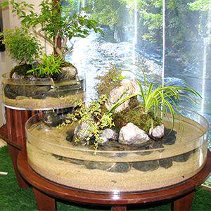 屋内ビオトープ「癒しの円形水槽」の写真